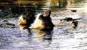 Original Hippo Paintings For Sale