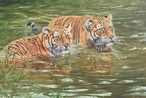 Big cat Painting of Pair of Tigers in water