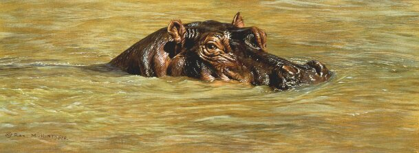 Hippo Paintings for Sale