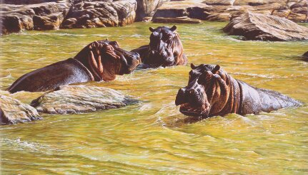 Original Hippo Painting for sale