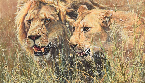 African Lion Paintings