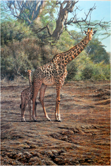 Giraffe Wildlife Paintings