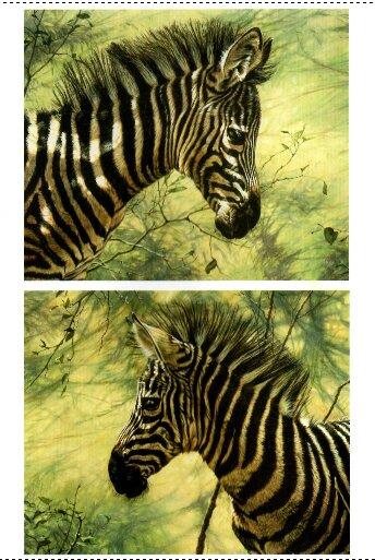 Original Paintings of Zebras