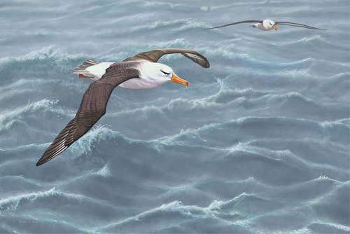 Seabird Paintings
