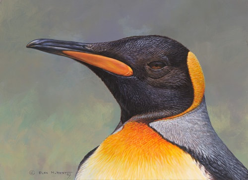 King Penguin Painting