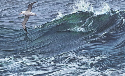 Paintings of Seabirds for Sale