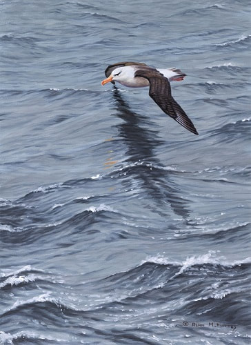 Seabird Paintings and Prints