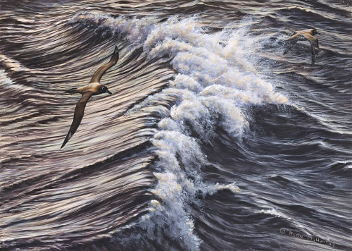 Paintings of Seagulls by Bird artist Alan M Hunt