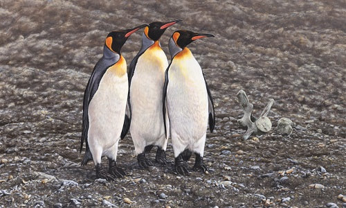 Three Kings Penguin Painting and Print