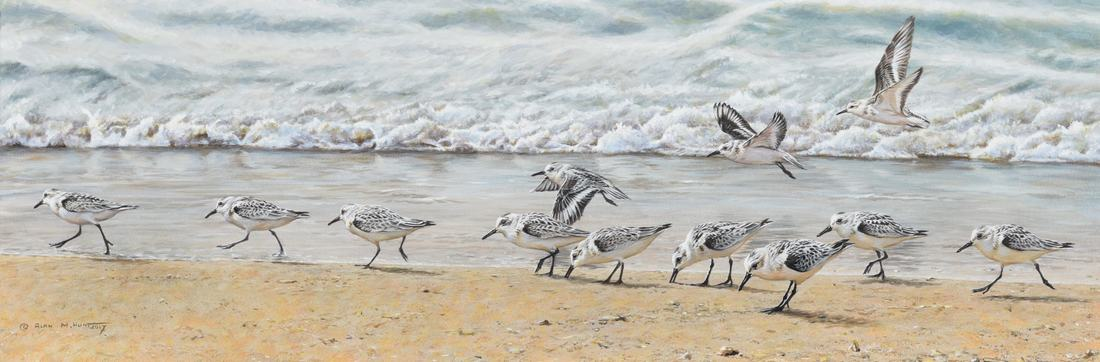 Sea Bird Painting For Sale by Alan M Hunt