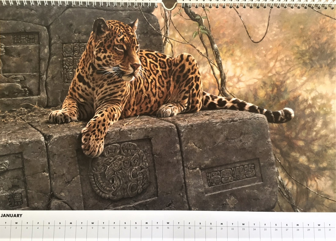 Alan M Hunt Big Cats Calendar 2019