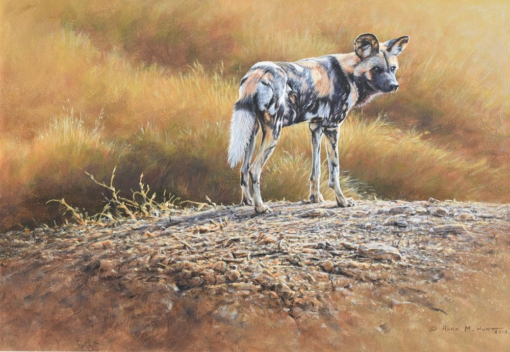 Painted African Dog Original For Sale
