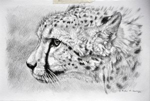 Cheetah Art Images