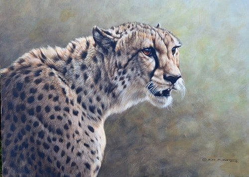 Paintings of Cheetahs for sale