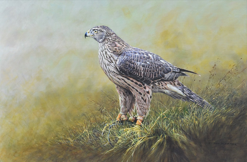 Original Goshawk Painting