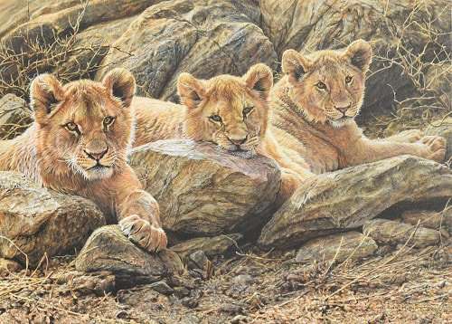 Original Lion Cub African Big Cat Painting