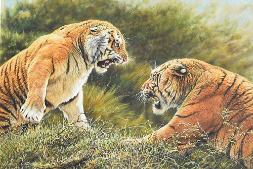 Painting of Tigers Fighting