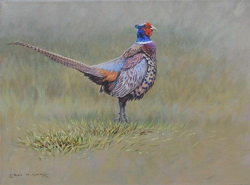 Original Painting of a Male Pheasant