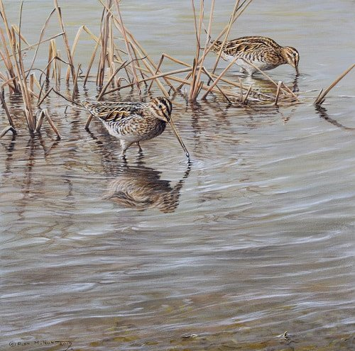 Pair of Snipe - Game Birds