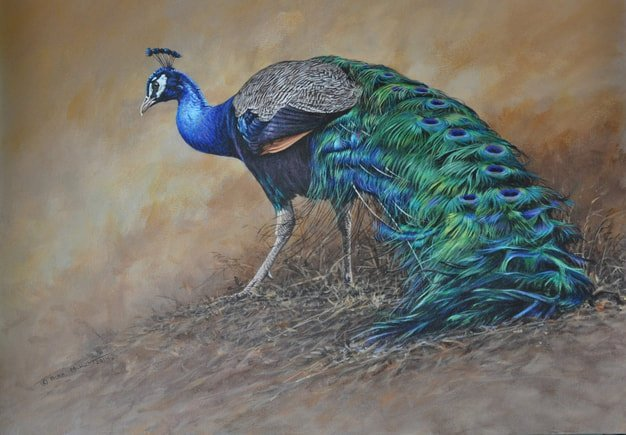 Original Peacock Painting