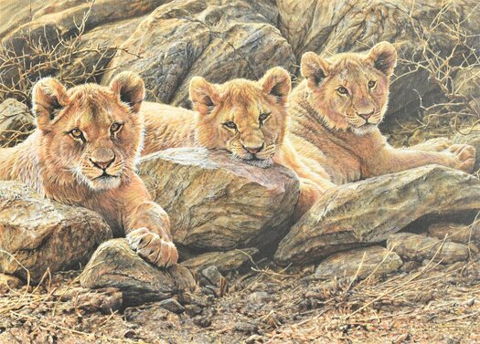 Lion Cub Painting Picture