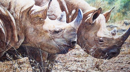 Rhino Paintings for Sale