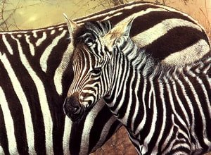Serengeti Child Zebra Painting
