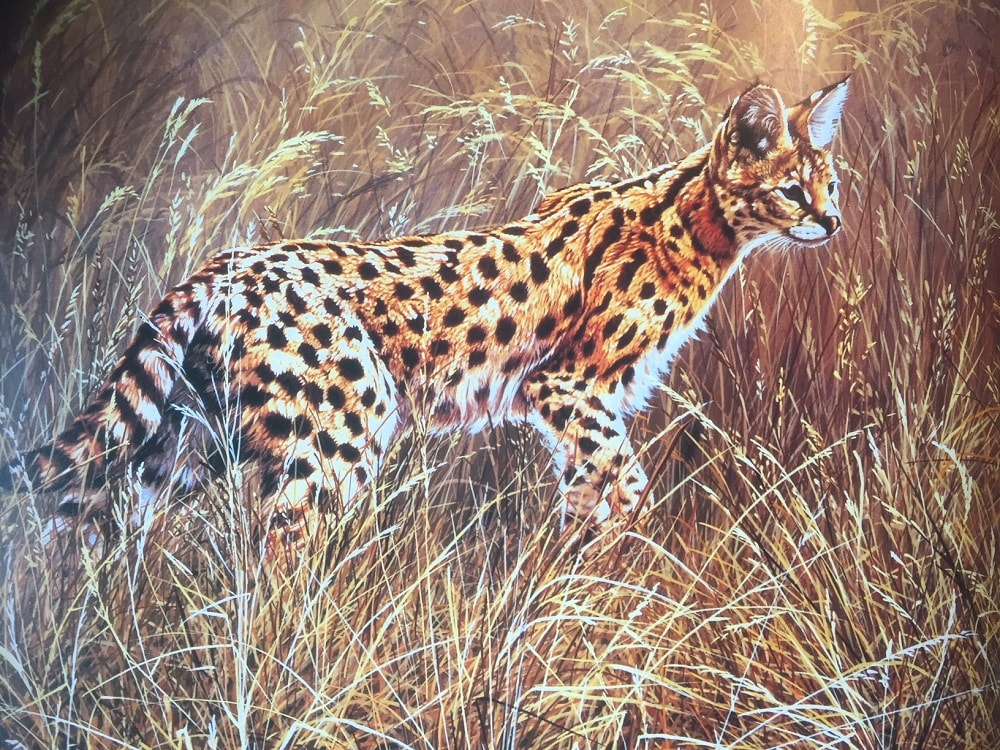 Original Serval Paintings