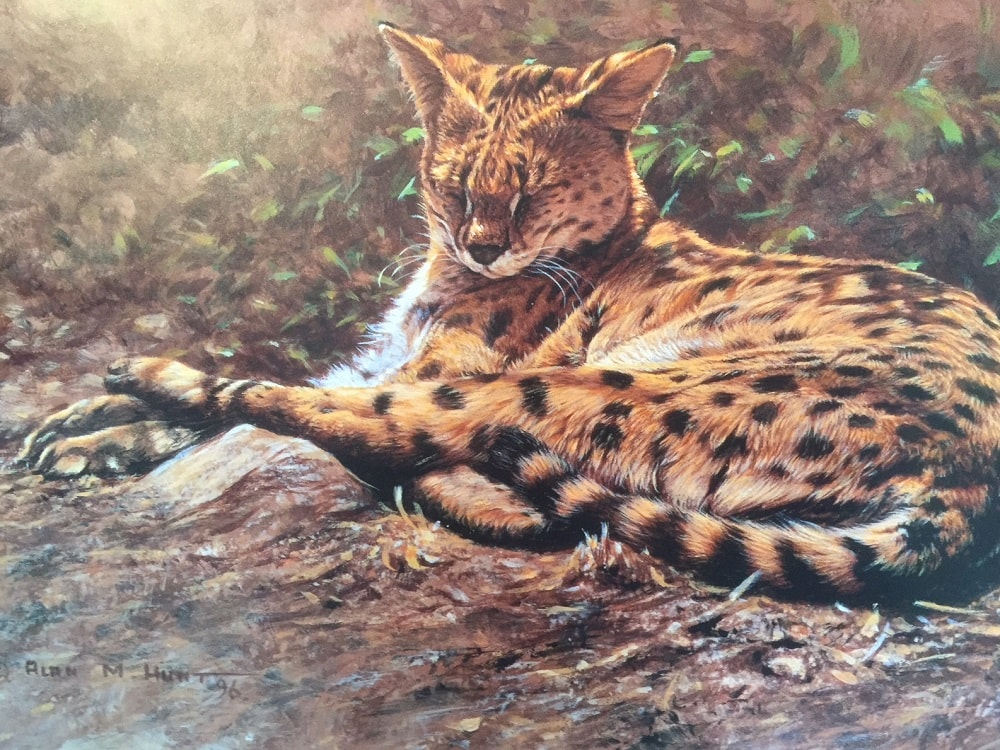 Original Paintings of Servals