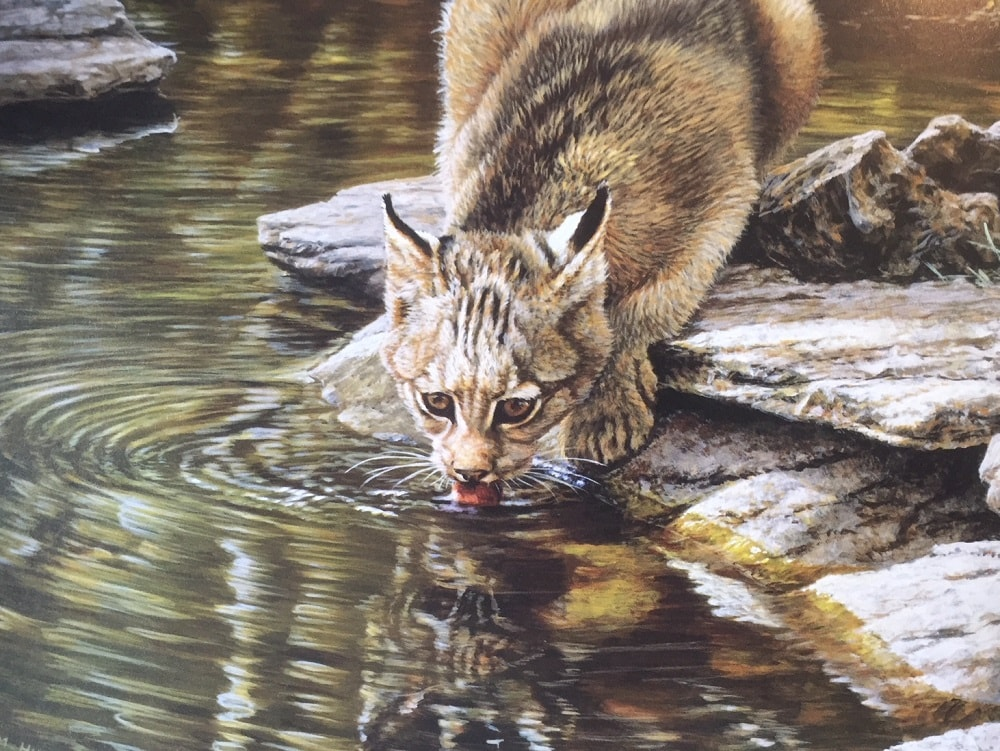 Original Bobcat Painting