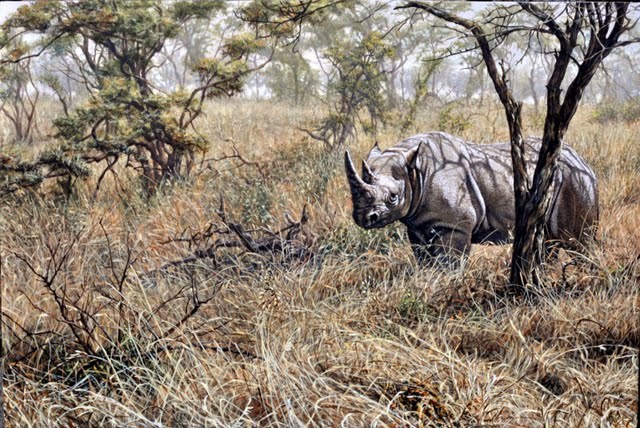 Time to move on Rhino Painting