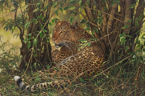 Limited Edition Wildlife Art Prints